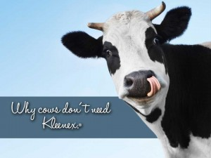Why cows don't need Kleenex.